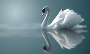 Swan - Water - Sun - Sky All on the Seamless Plain of Awareness