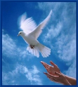 worldpeacedove